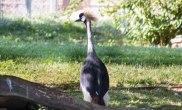 Big bird (1 of 1)