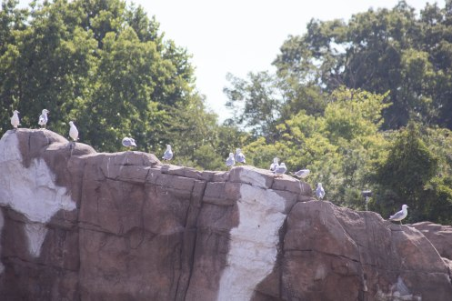 Birds on a rock (1 of 1)-2