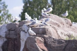Birds on a rock (1 of 1)