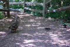 Ducks (1 of 1)
