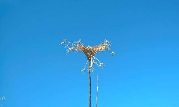 flower weed 2