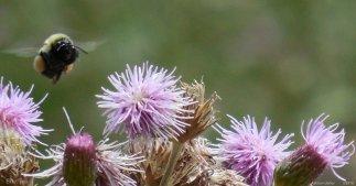macro bee 2