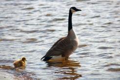 row of ducks6