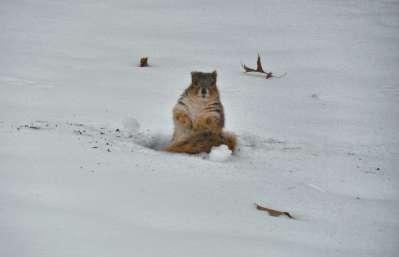 squirrel picture