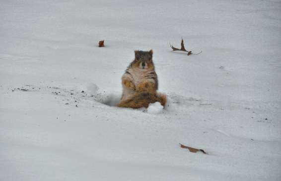 squirrel picture
