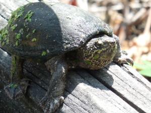 summer turtle 2