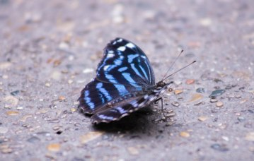 The mystical Butterfly (1 of 1)